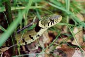 Les reptiles de nos regions