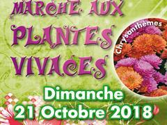image - MARCHE AUX PLANTES VIVACES