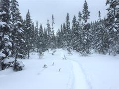image - CROSS COUNTRY SKIING AND SNOWSHOES-WALKS