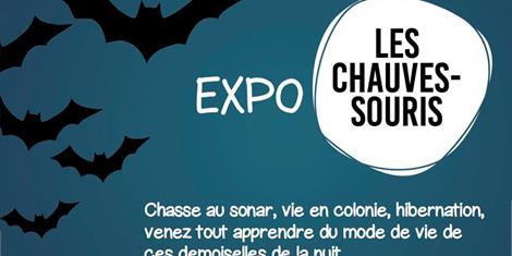 image - EXPOSITION | CHAUVES SOURIS