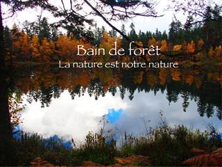 Bains de forêt Vosges