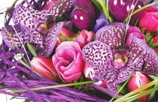 Lavandou Fleurs