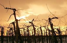 www.photo-libre.fr