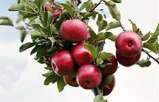Verger Wagner