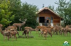 Parc Animalier de Sainte Croix