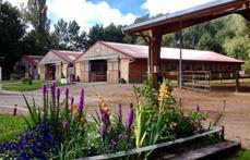 Ecole équitation Saint-Avold