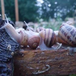 Les Escargots du château de Tusey