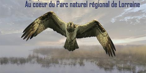 image - SORTIES OBSERVATION AUX ETANGS DE LACHAUSSEE