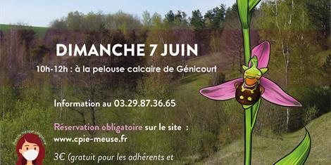 image - DECOUVERTE DES ORCHIDEES