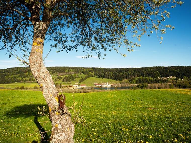 Le Lac de l'abbaye à Grande-Rivière, Haut-Jura